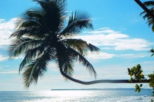 Tropical Days
