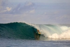 Telo Surf Variety